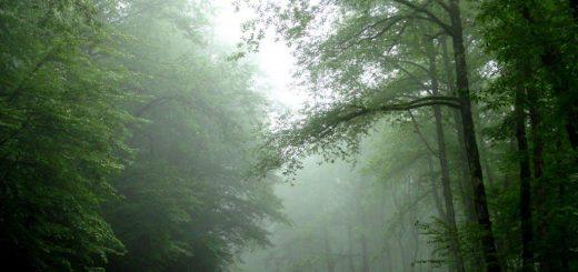 جنگل های مکارود